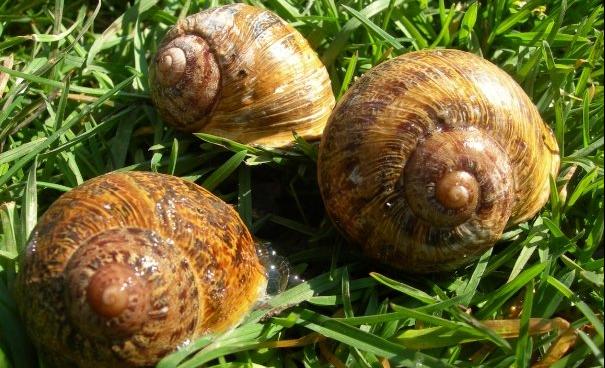 Déconfinavirus (8) : l'escargot dans sa cabane